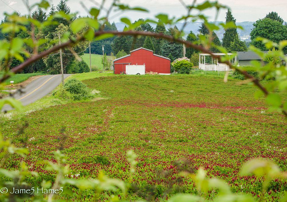 Photo in Landscape #springcontest #red #spring crimson