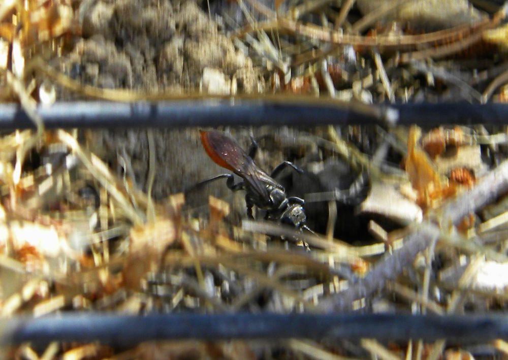 Photo in Macro #insect #nature #macro