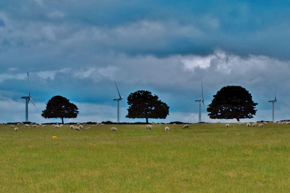 Photo in Landscape #wind farm #turbine #pattern #blue #green #sheep #ingbirchworth