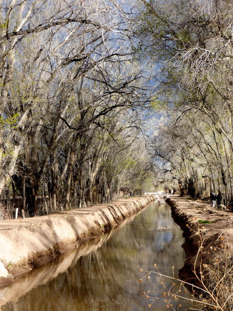 Photo in Landscape #albuquerque #acequia #new mexico #water #canopy #hunter ten broeck