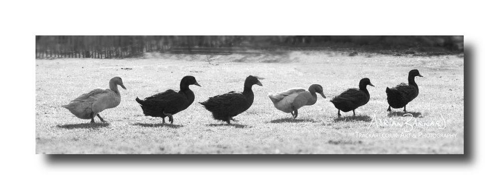 Photo in Nature #geese #goose #birds #wildlife