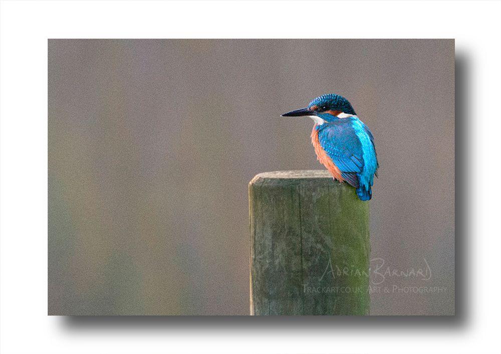 Photo in Nature #kingfisher #blue #bird #fishing