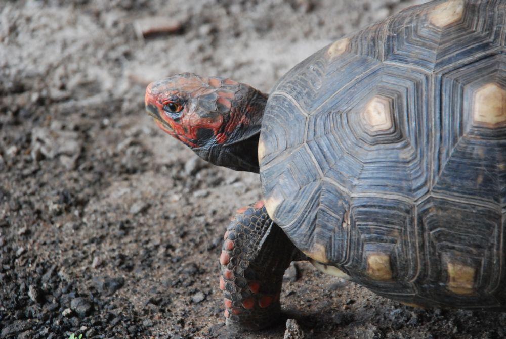 Photo in Nature #jabuti ou tartaruga