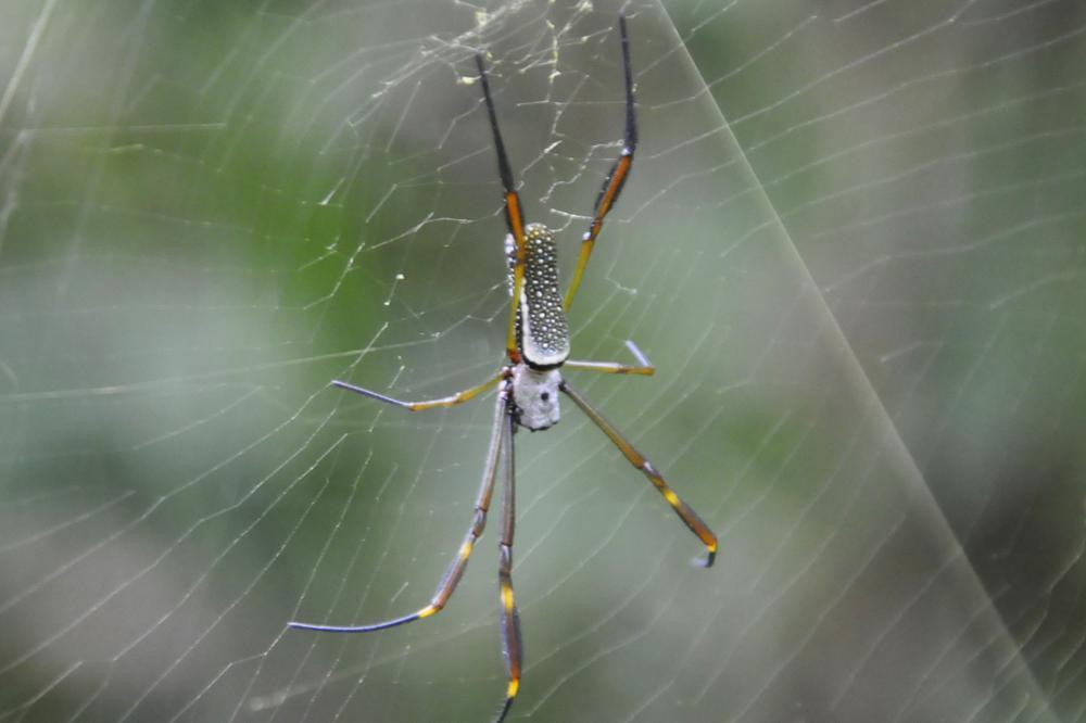 Photo in Nature #aranha