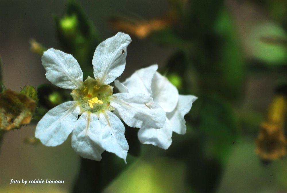 Photo in Macro #flower #macro #philippines #filipino #ilipina