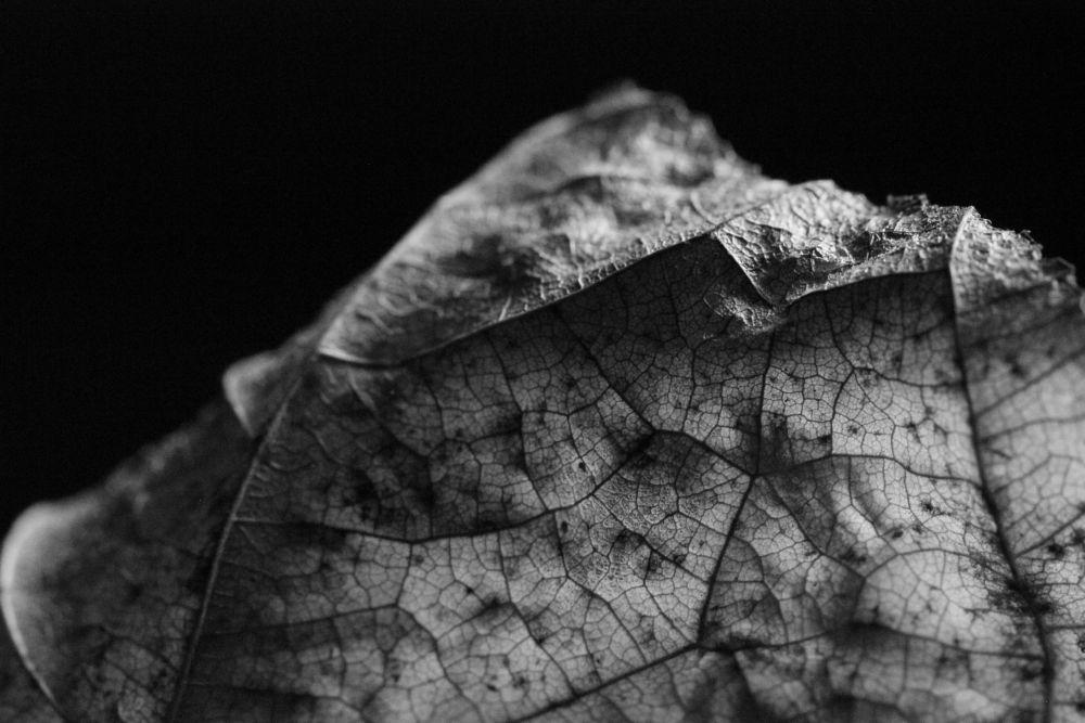 Photo in Random #macro #black and white #fall #nature