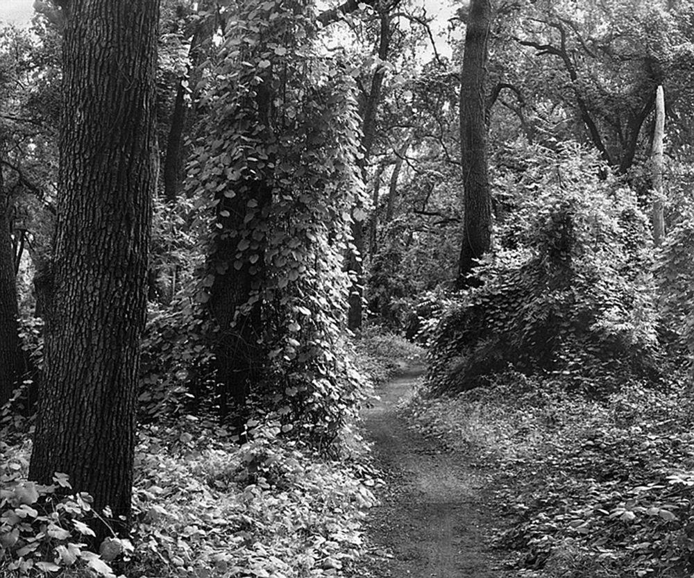 Photo in Landscape #bidwell park #path #black and white #landscapes
