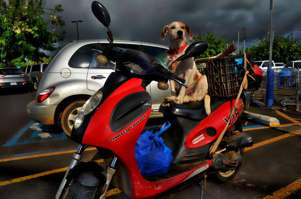 Photo in Animal #humor #dogs #animals