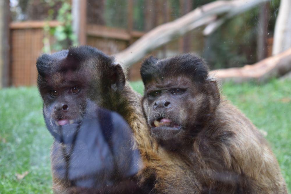 Photo in Animal #monkeys #curious #oasispark #reflections
