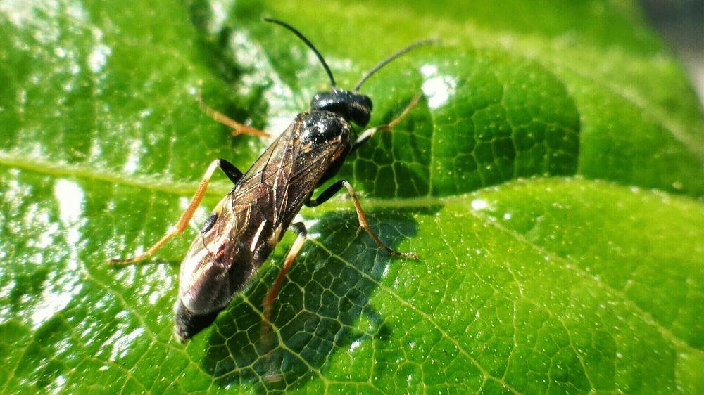 Photo in Macro #macro #nature #wasps #avispas #insects #insectos #naturaleza
