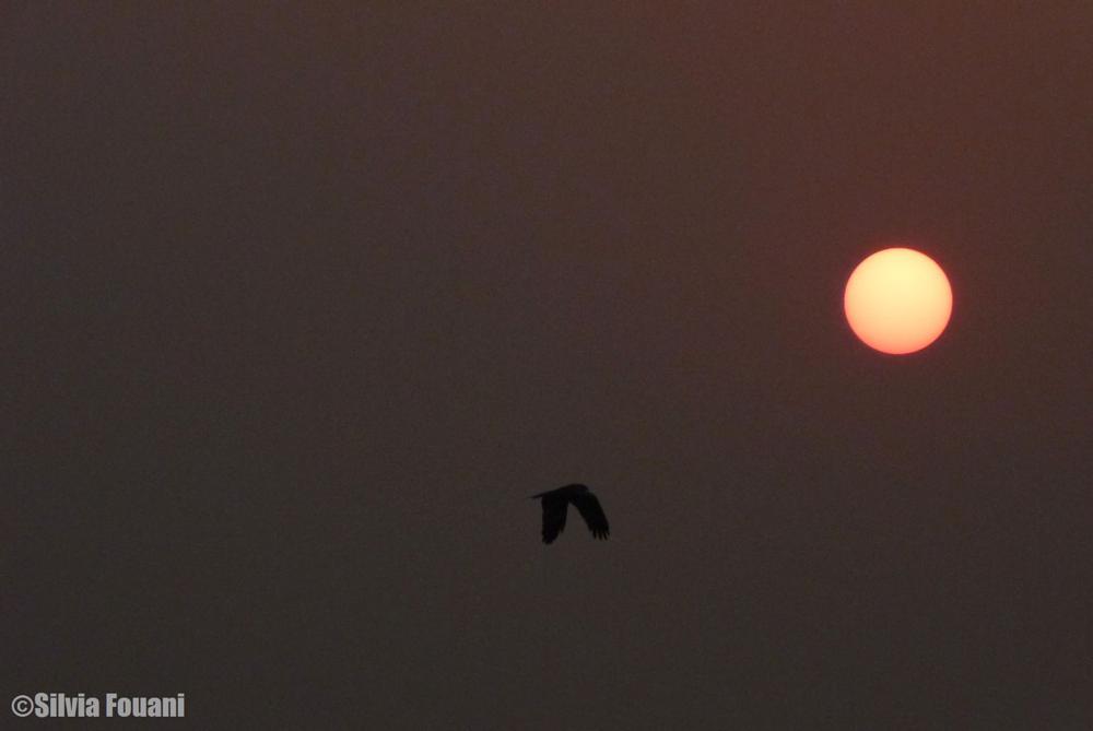 Photo in Nature #sunrise morning sun