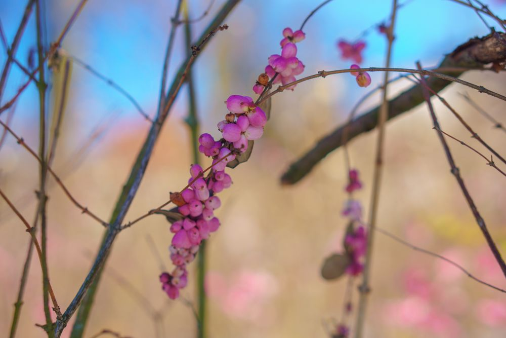 Photo in Nature #winter #colorful #trees #bokeh #nature #closeup #sonyalpha