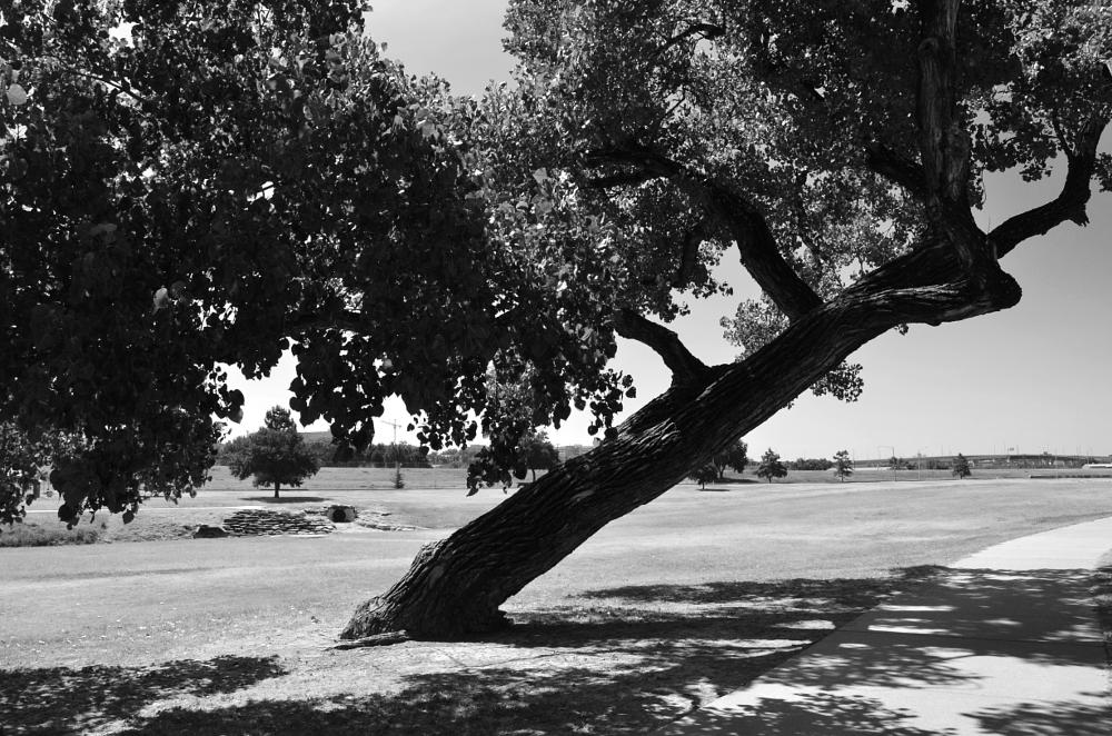 Photo in Black and White #tree #black and white #landscape #nature #grass #park #sidewalk #trail #trails #summer