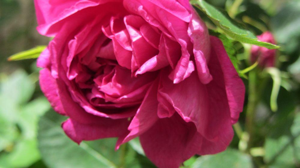 Photo in Nature #flower #nature #flower nature