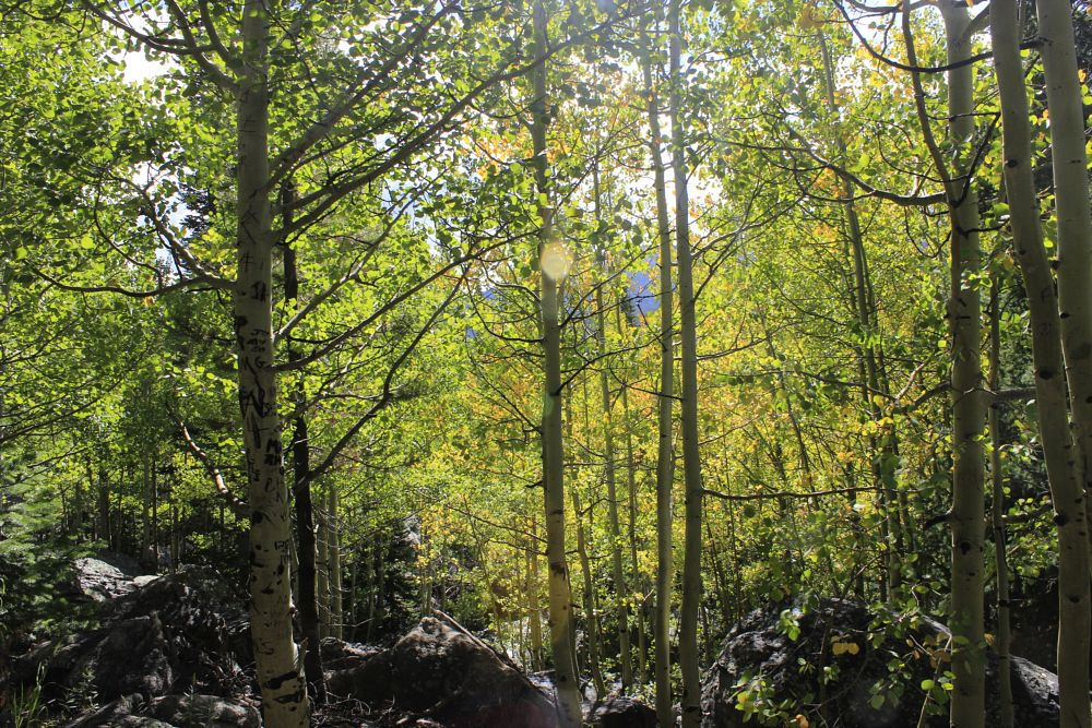 Photo in Landscape #landscape #green #trees