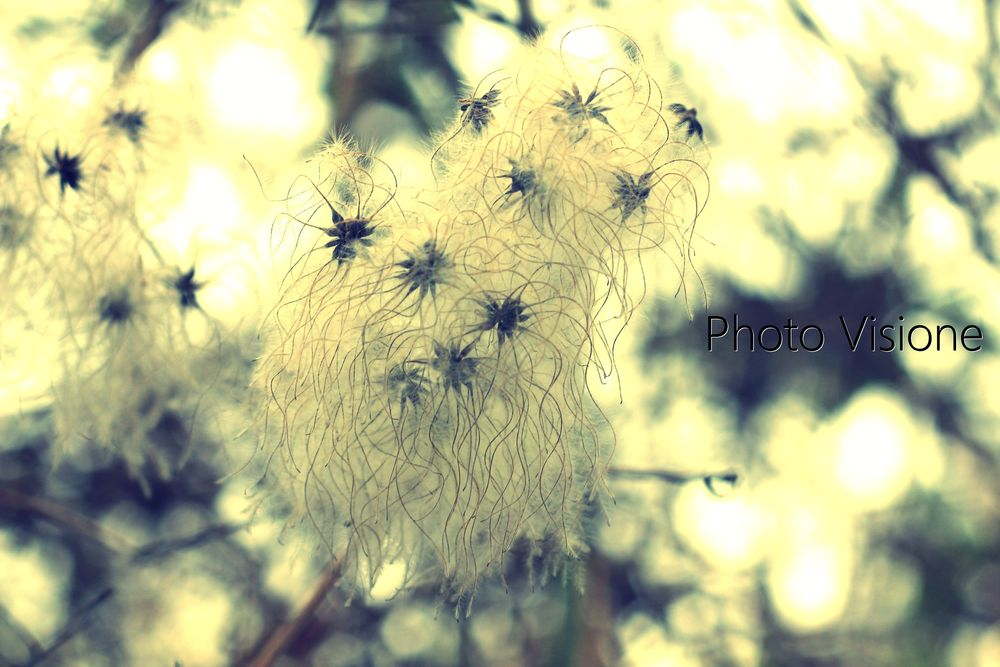 Photo in Nature