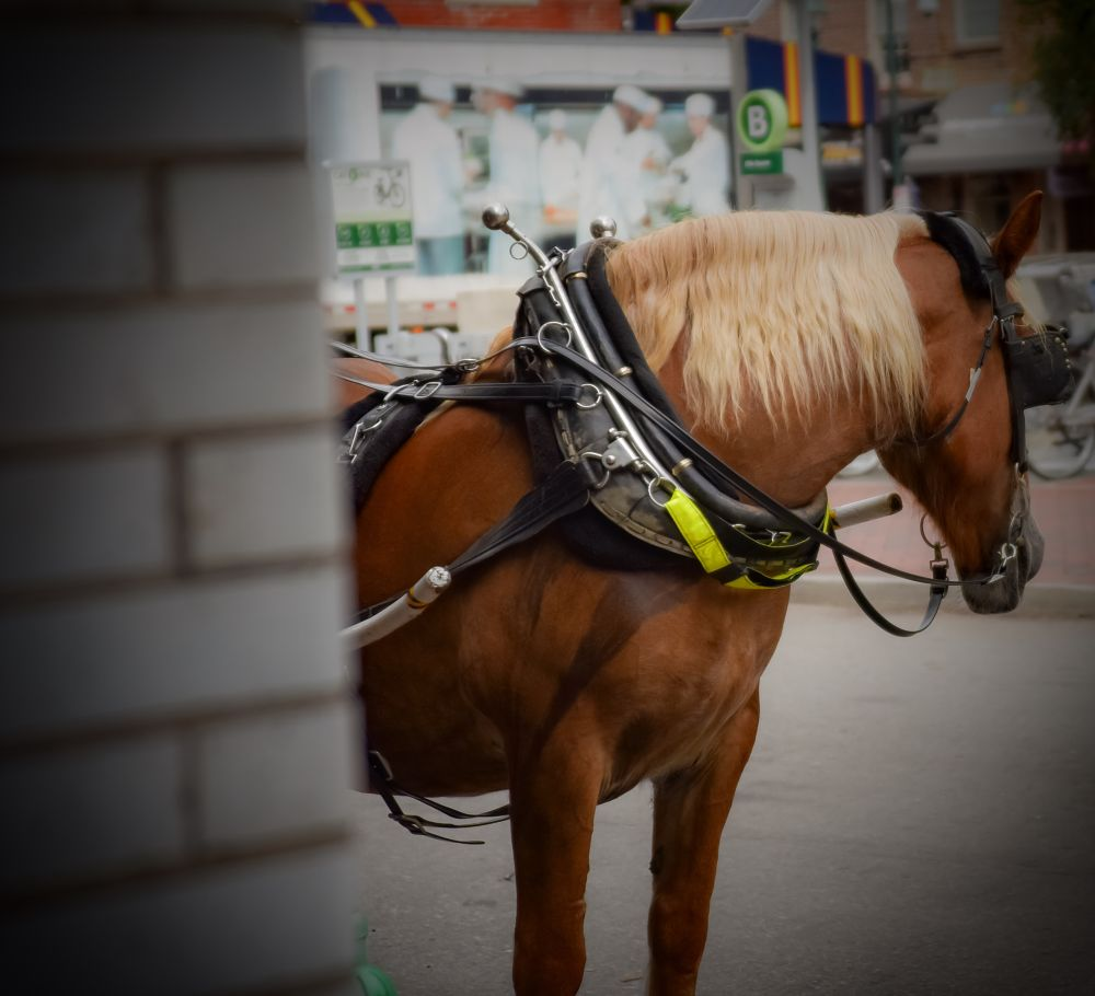 Photo in Animal #horse #city view #carriage