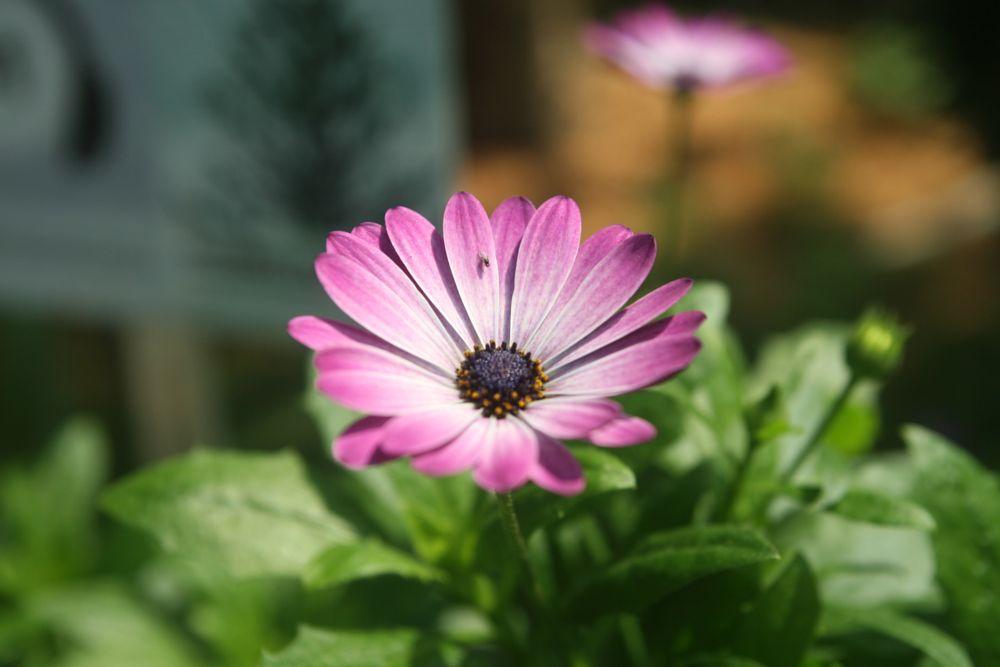 Photo in Nature #purple #cone #flower #dome