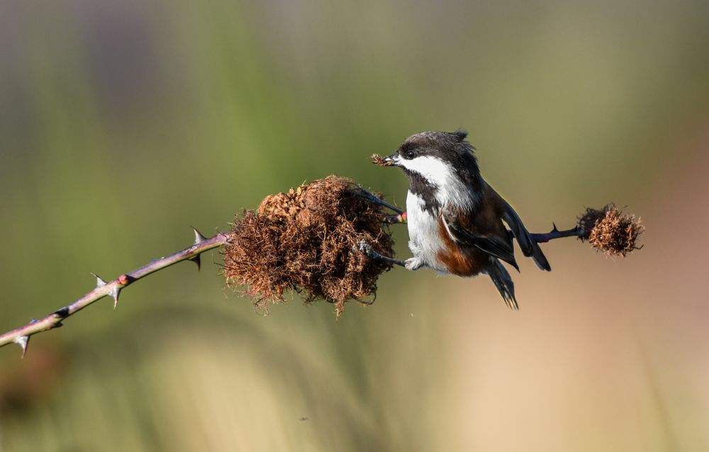 Photo in Nature #birds #chickadee #nature #wildlife #winter #close-up #colours