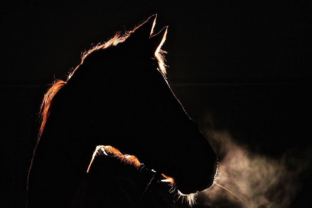 Photo in Animal #horses #horsephotography #creative #horse