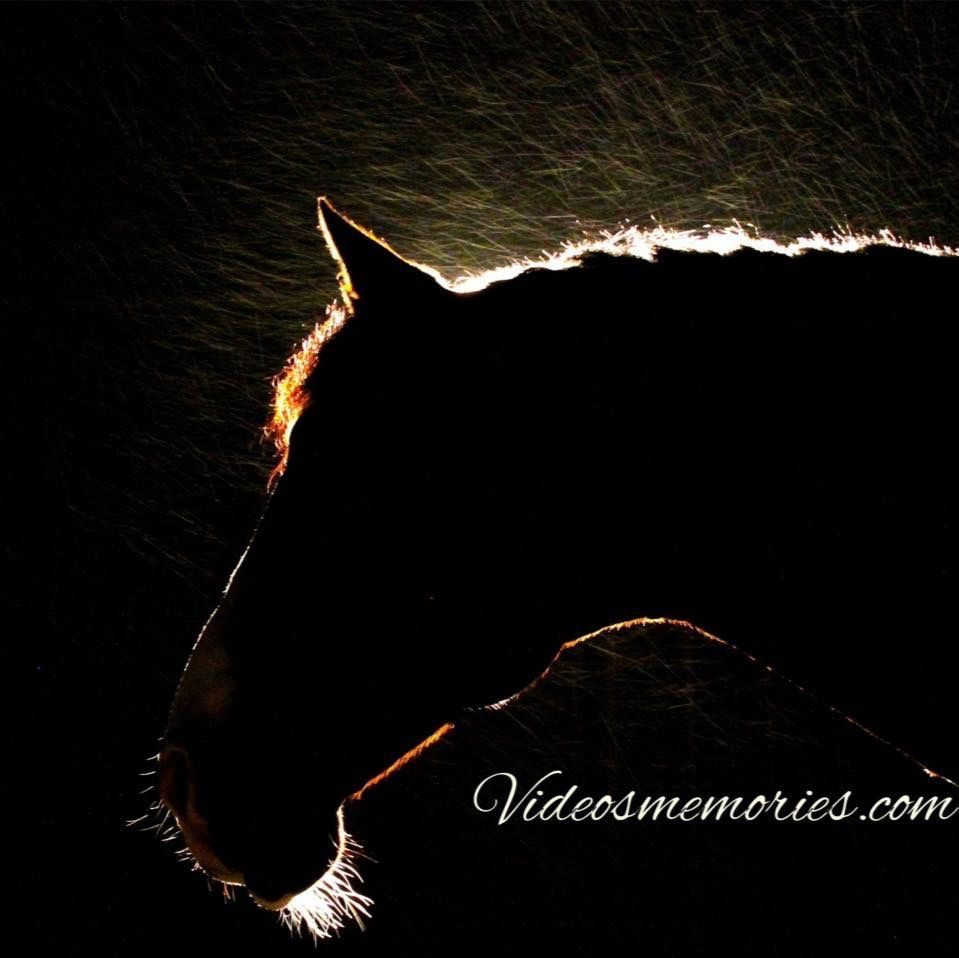 Photo in Animal #horse #rainyday #horses #animals #photography