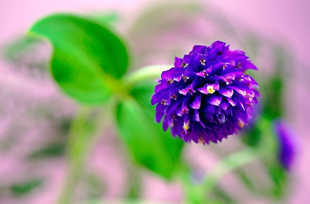 Photo in Macro #flower #pink #garden #nature #green