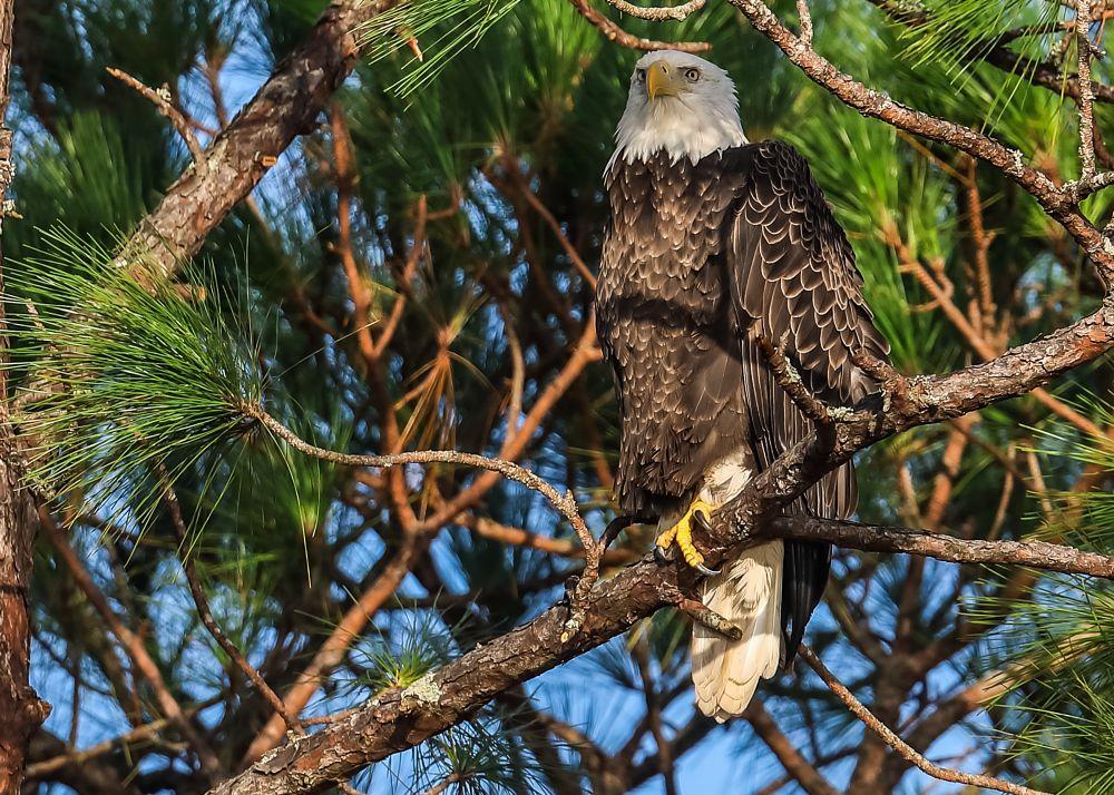 Photo in Animal #eagle #animal #nature #wildlife #birds #prey