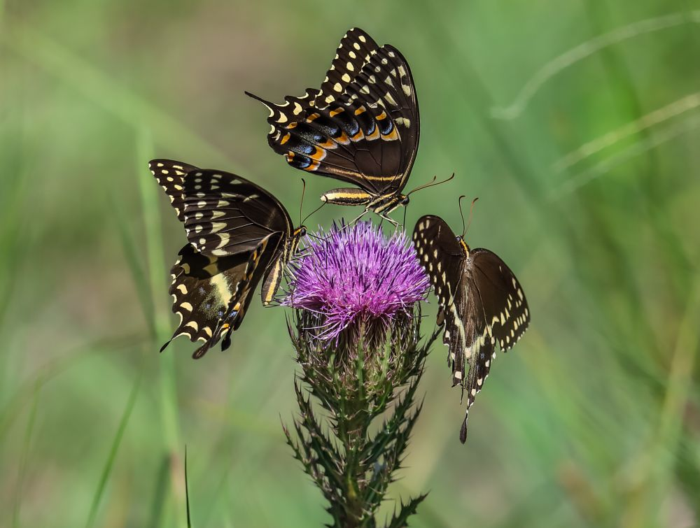 Photo in Animal #butterfly #animal #nature #flower #wildlife