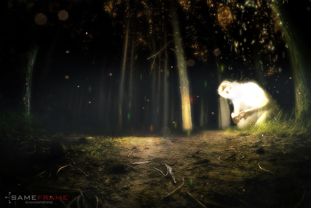 Photo in Random #ghost #bright #glow #forest #night #trees