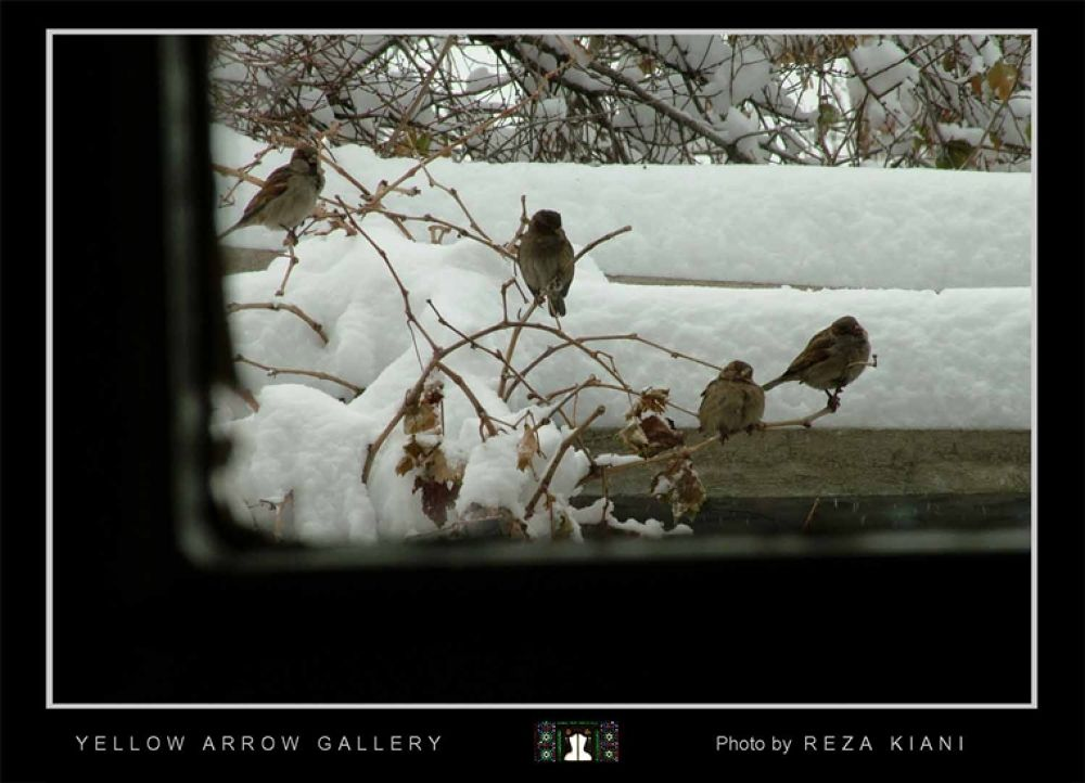 Photo in Random #- #bird #snow #reza #kiani