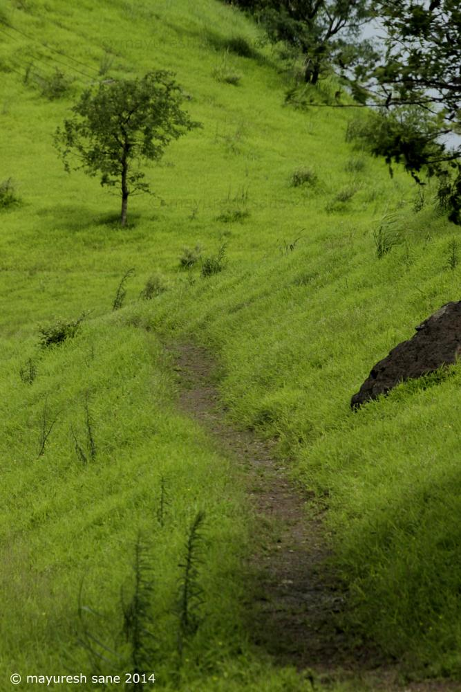 Photo in Nature #path #ways #jungle #greenery #lanscape