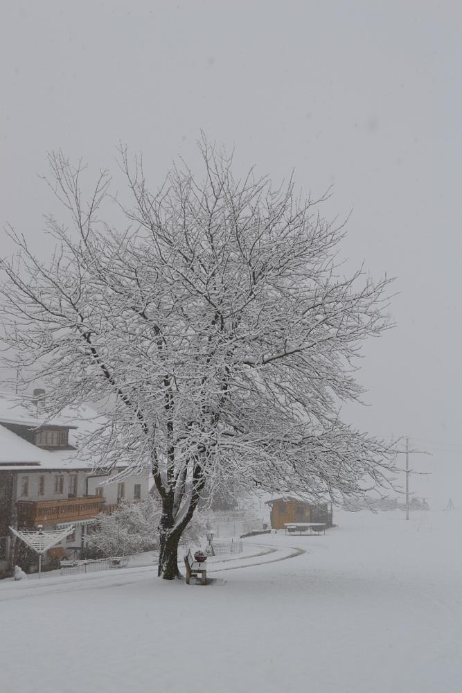 Photo in Nature #snow #schnee #winter #white #christmas #happy #santa #weiß #flocken #schneit #let it snow #cold #winter #chiemsee #bayern #letztes jahr #last year #tree #baum #baum mit schnee #weißer baum