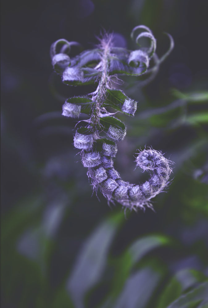 Photo in Nature #fern