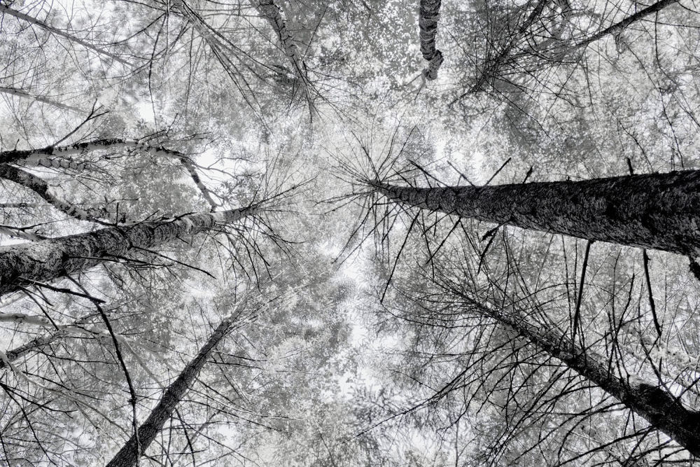 Photo in Black and White #trees