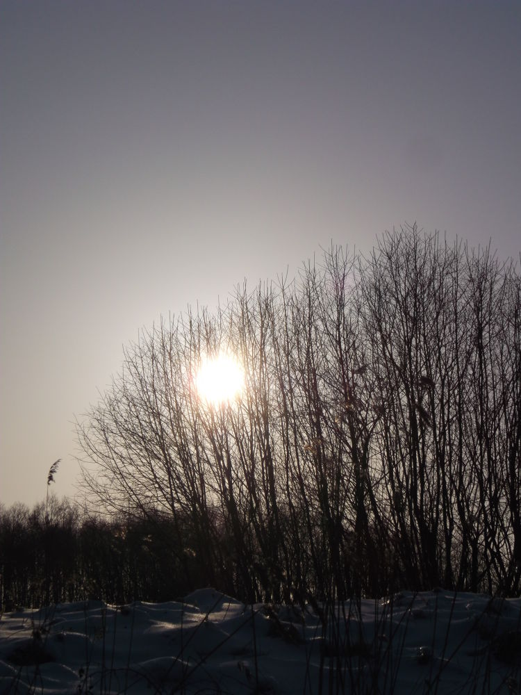 Photo in Nature #sun trees