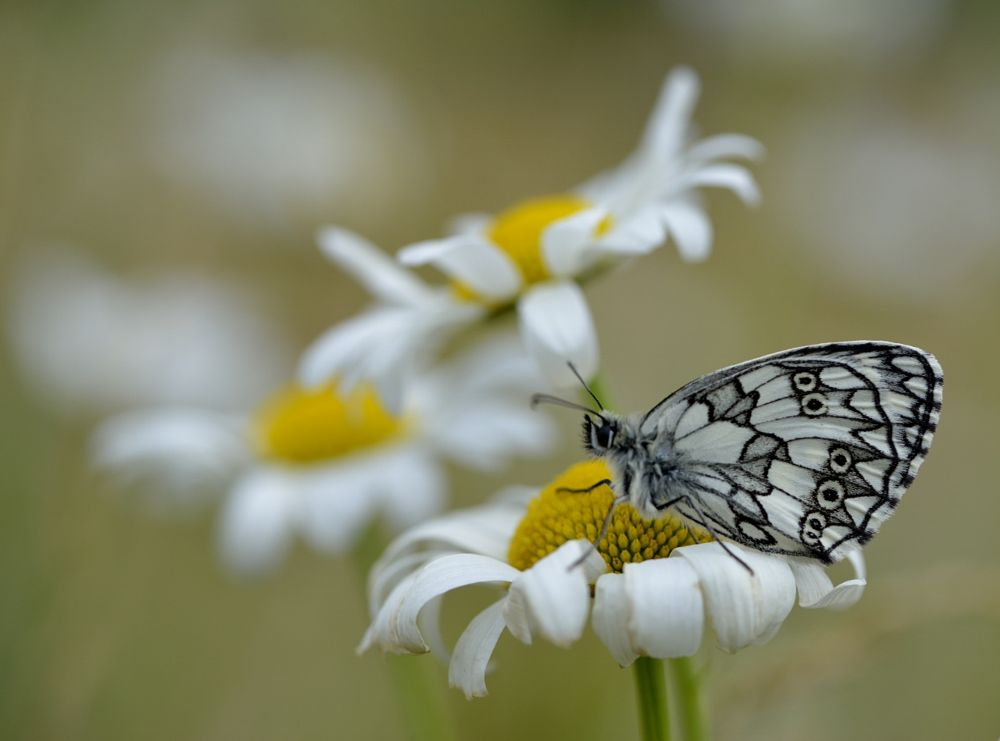 Photo in Nature #butterfly #macro #nature
