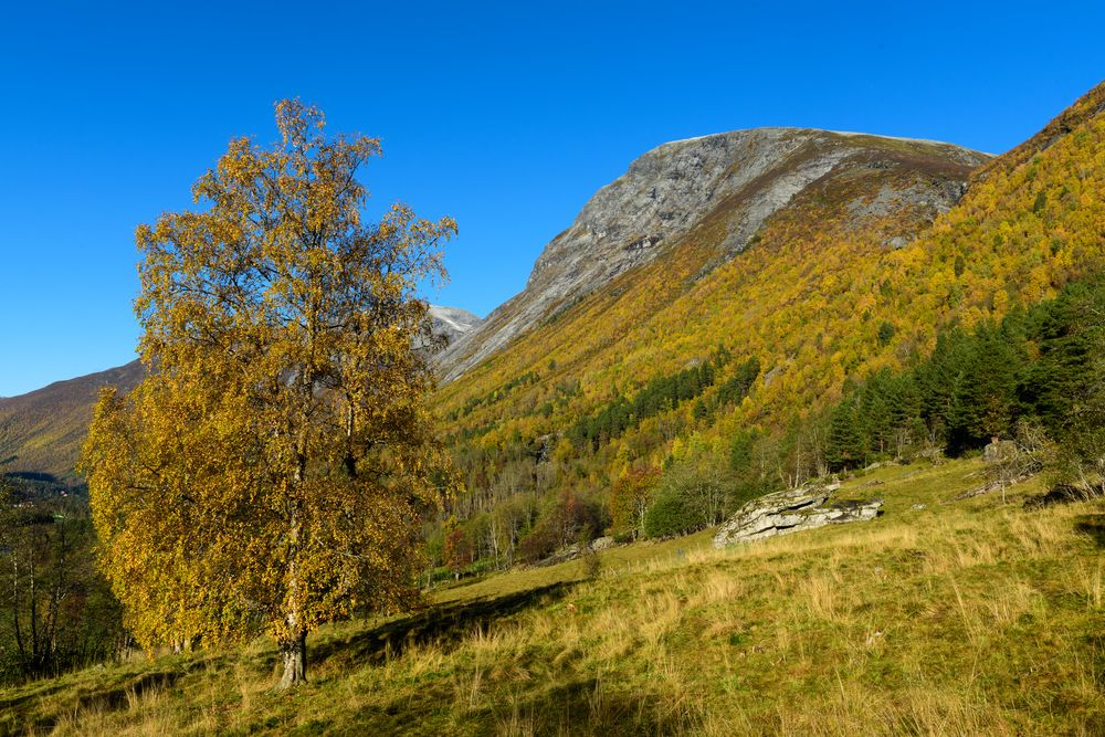 Photo in Landscape #autumn #mountains #tree #norway #more og romsdal