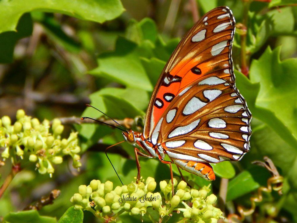 Photo in Nature #butterflies #nectarlover #nature #macro