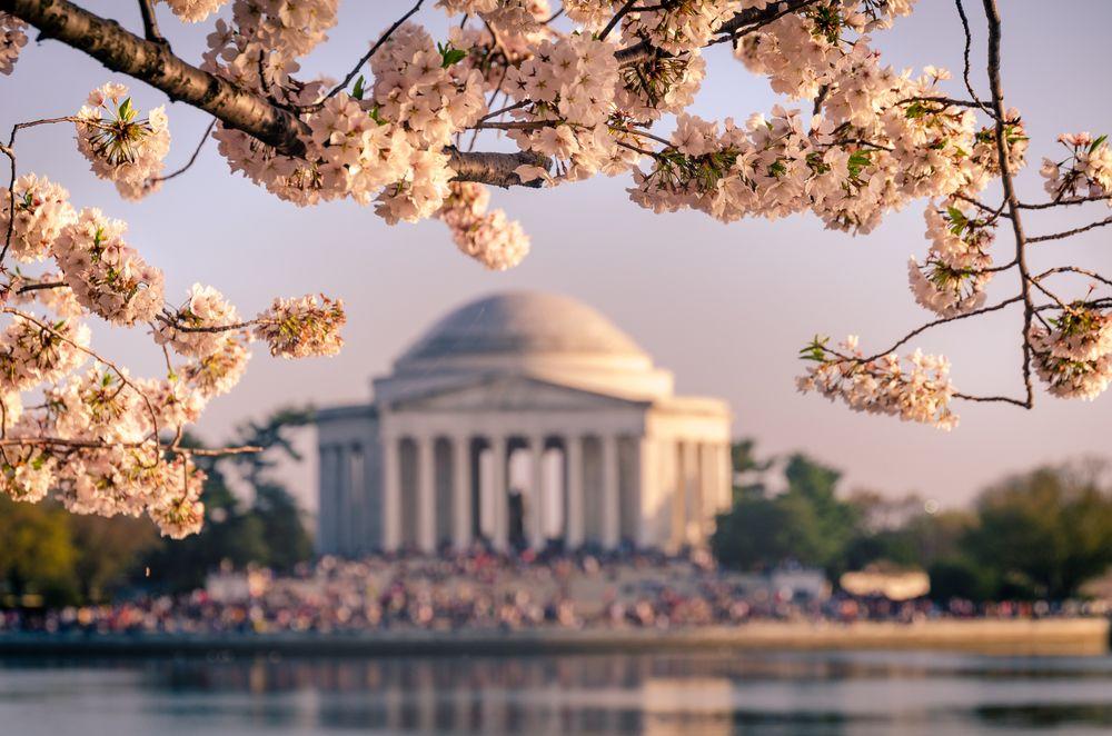 Photo in Random #cherry blossom festival #events #landscape #panorama #photo genre #tidal basin #washington dc