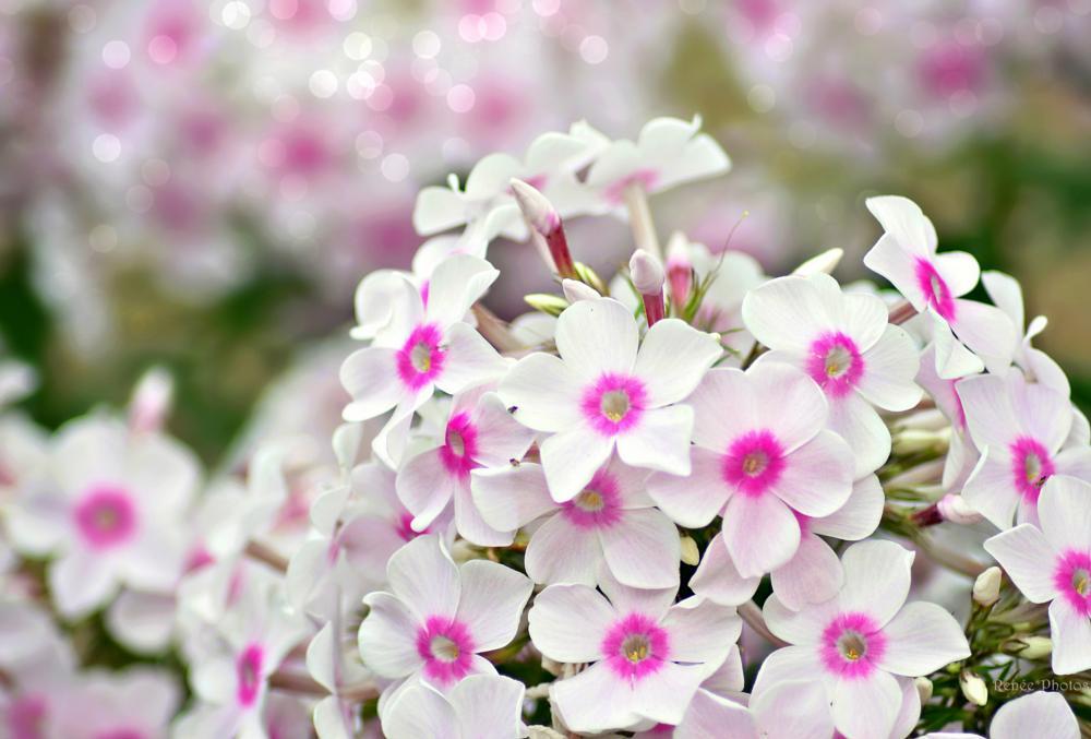 Photo in Nature #nature flower bokeh