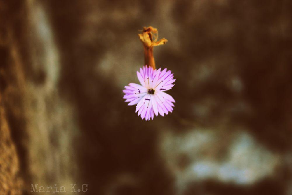 Photo in Random #summer #2013 #cyprus #keryneia