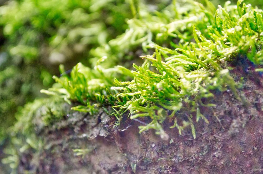 Photo in Landscape #moss #green #delicate