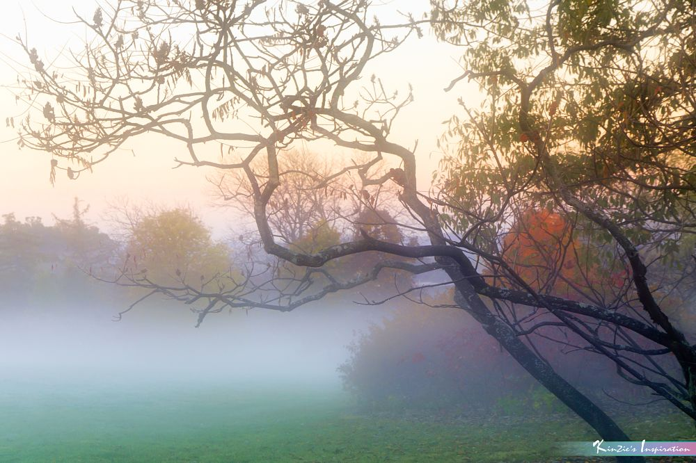 Photo in Nature #misty sunrise moment #a beautiful nature #mist #misty #fog #foggy #morning #sunrise #dawn #the morton arboretum #lisle #illinois #us #usa #chicago #autumn #fall #nature #landscape #macro #forest reserved #tree #trees