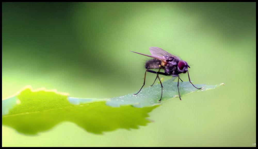 Photo in Macro #fly macro nature green