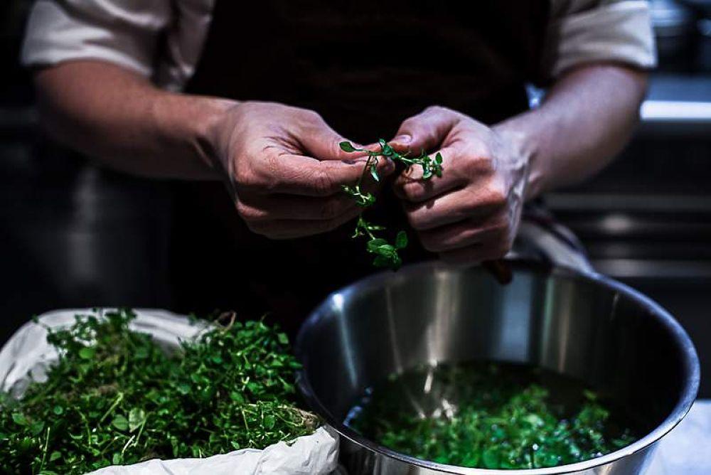 Photo in Random #cuisine de chef #pertica #florence fouché #canon 5d #guillaume foucault #restaurant #en cuisine #salade #mouron des oiseaux #préparation #geste