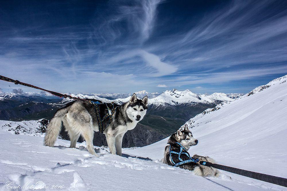 Photo in Landscape #mountain #husky #paysage