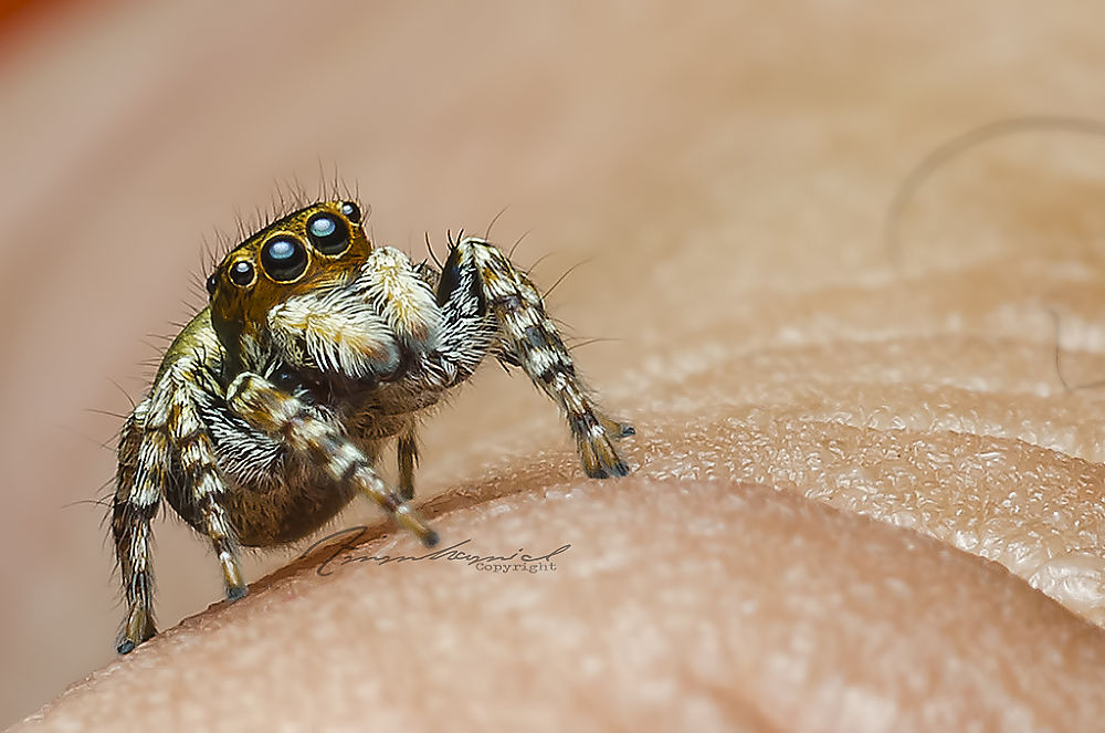 Photo in Macro #d7000 #spider #macro #insect #ammhamid