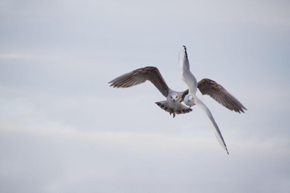 Photo in Random #birds #animals #seagulls