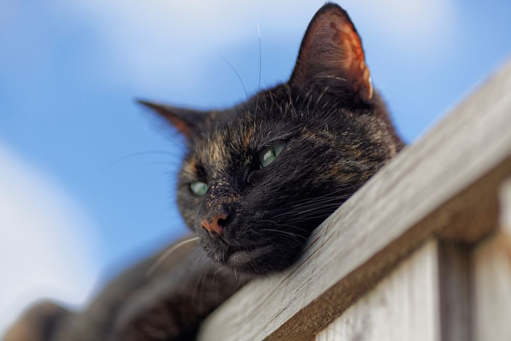 Photo in Random #cat #dof #canon #canon5dmkii #tamron