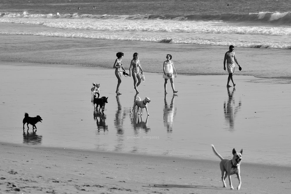 Photo in Nature #sea #dog #beach #nikon #d7000 #bali